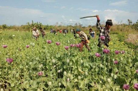 Pat Jasan Destroys Poppy Farms In Kachin State